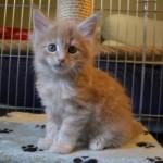 Rubycats Athena