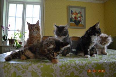 alla kattungarna