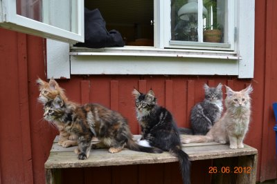 alla kattungar
