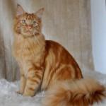 Rubycats Satellite 10 månader