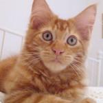 Rubycats Satellite 13 veckor