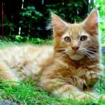 Rubycats Satellite 4 månader