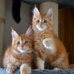 Joline med syskon