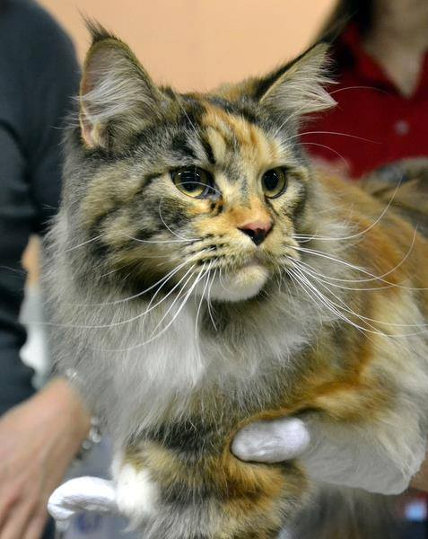 Rubycat's Luna