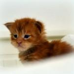 SE*Rubycat's Goliat